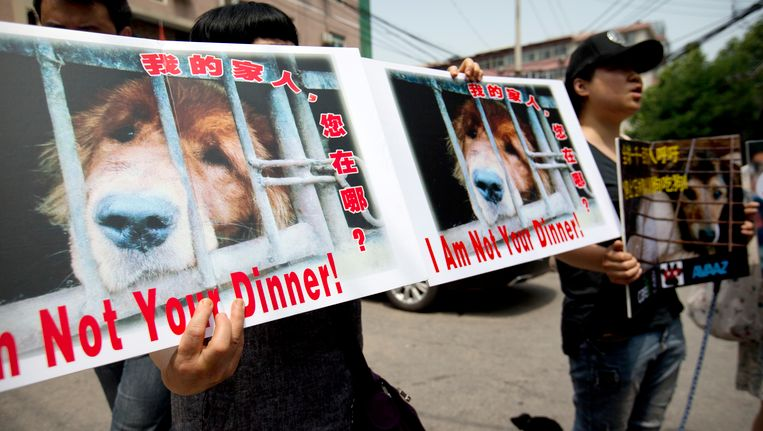 Petition against the Dog Meat Festival in China