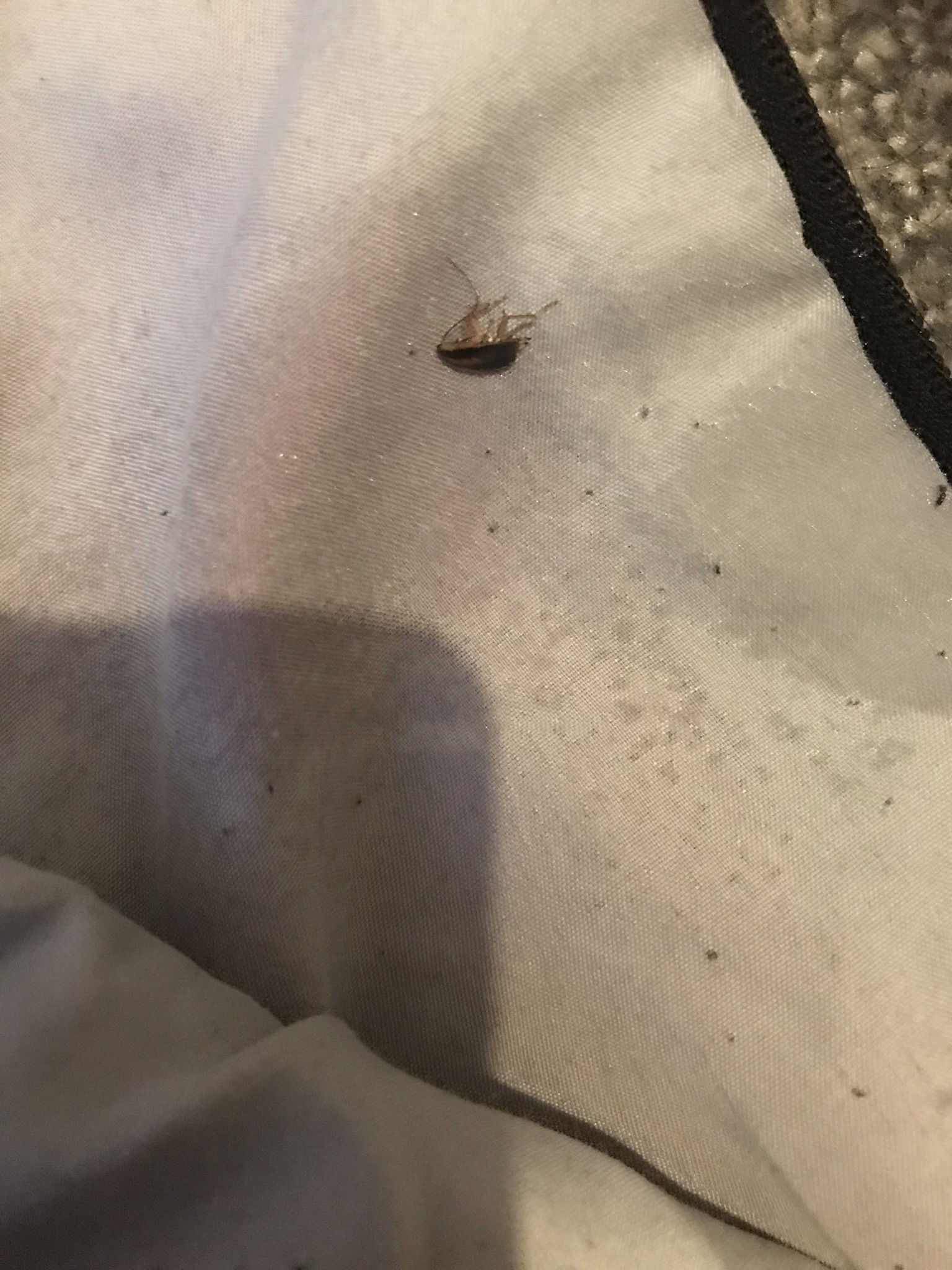 Cockroaches in amenities in a residential block of flats