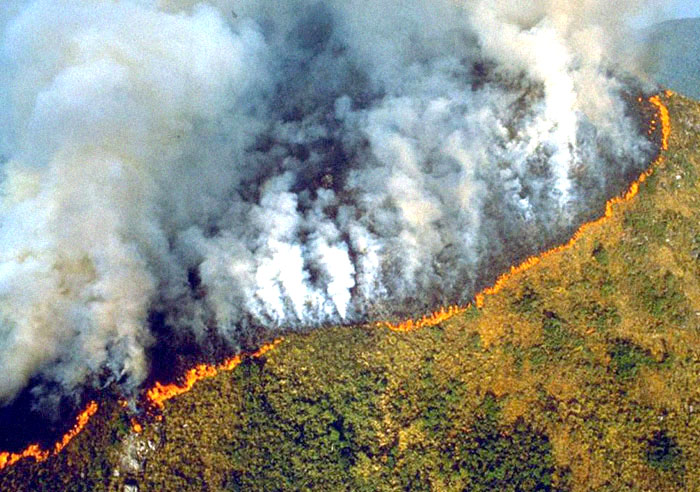 Petition against world's largest Amazon Fire