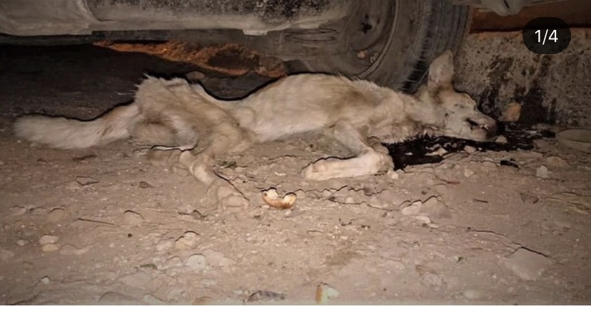 Animal rights in Egypt