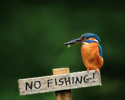 BAN FISHING FROM THE SEA FOR A DECADE WORLD WIDE...
