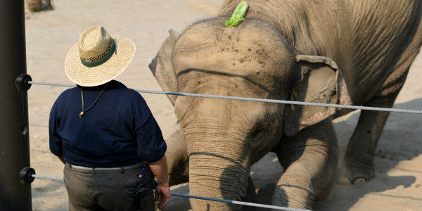 Save the Elephants' Ears! Pledge Not to Go to Oregon Zoo Concerts.