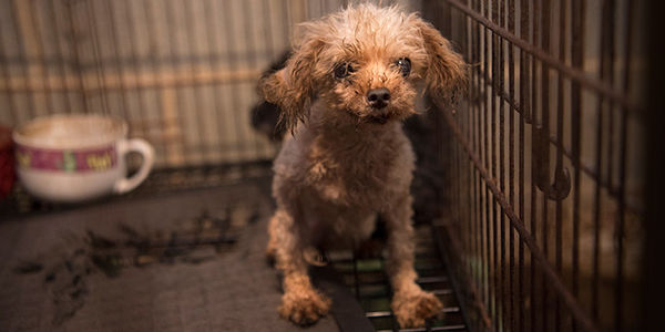 Crack Down On Puppy Mills!